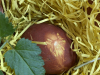 anja-pisanice-6-medium